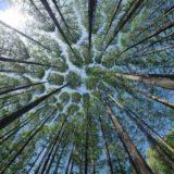 「木を見て森を見ず」は英語でどう言えばいい?正しい意味と英訳を解説
