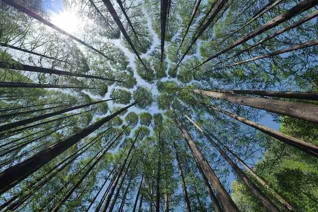 見 見 て 木 意味 を 森 を ず 木を隠すなら森の中の意味とは?語源や使い方・例文を解説